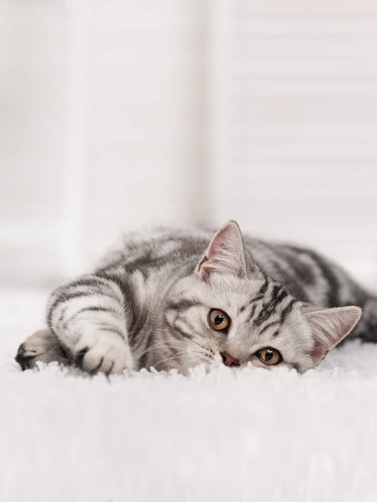 Cat wee off carpet