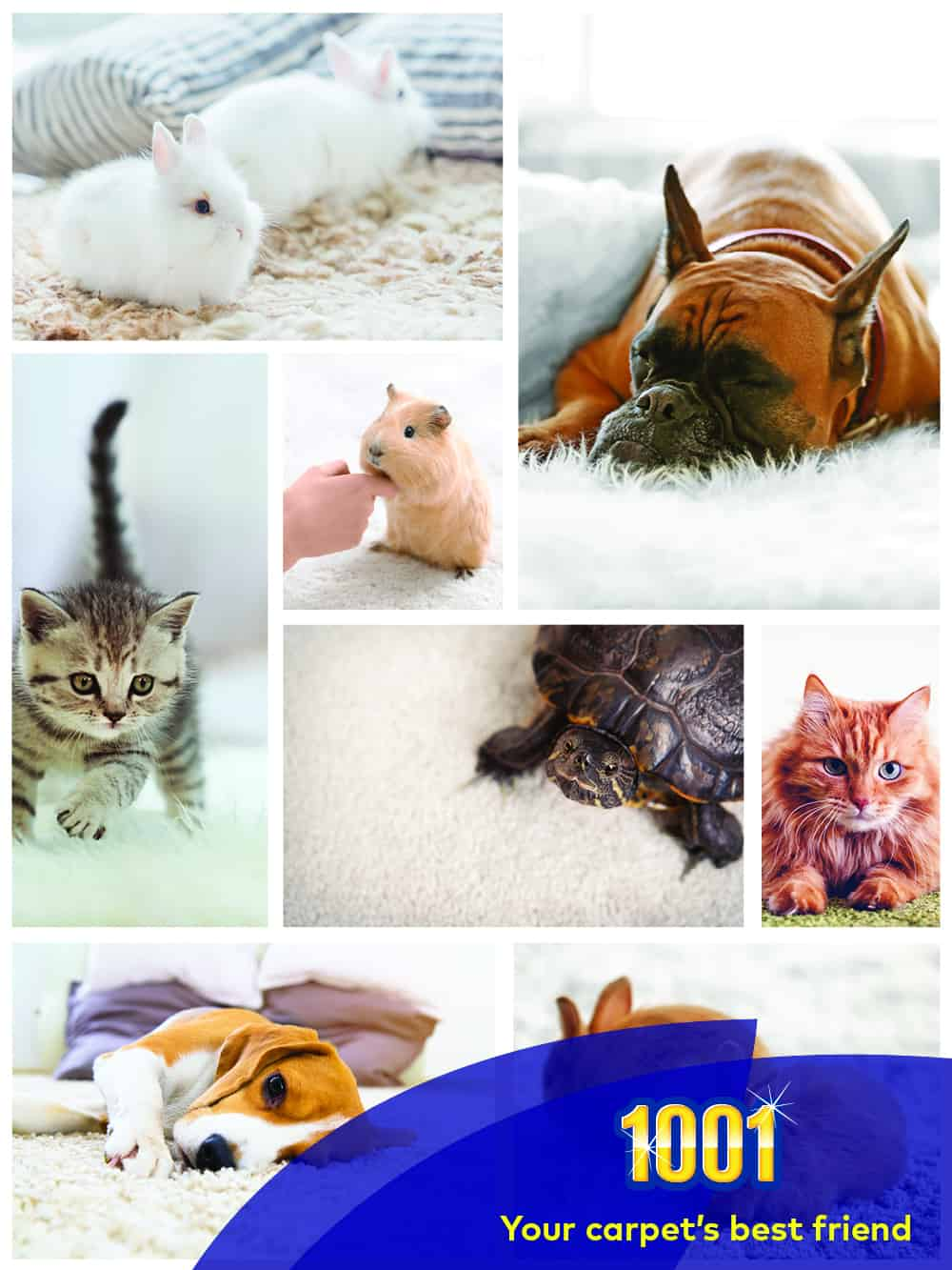 The Uk S 10 Most Popular Pets And Best Pet Safe Carpet Cleaner