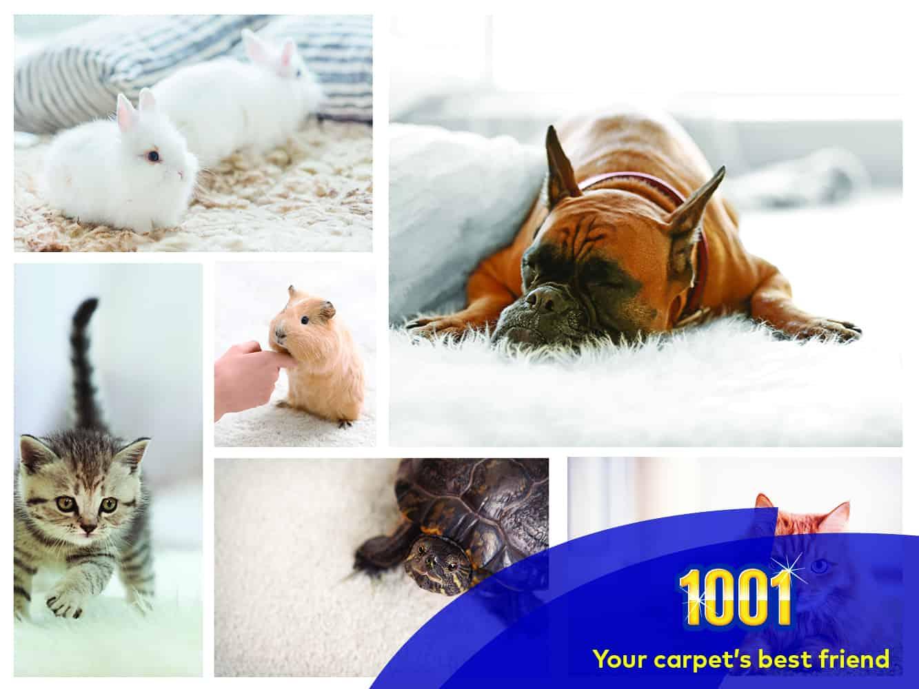 best pet safe carpet cleaner