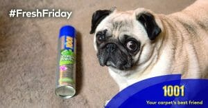 It's #FreshFriday - win a great pet prize & find out how to freshen carpet