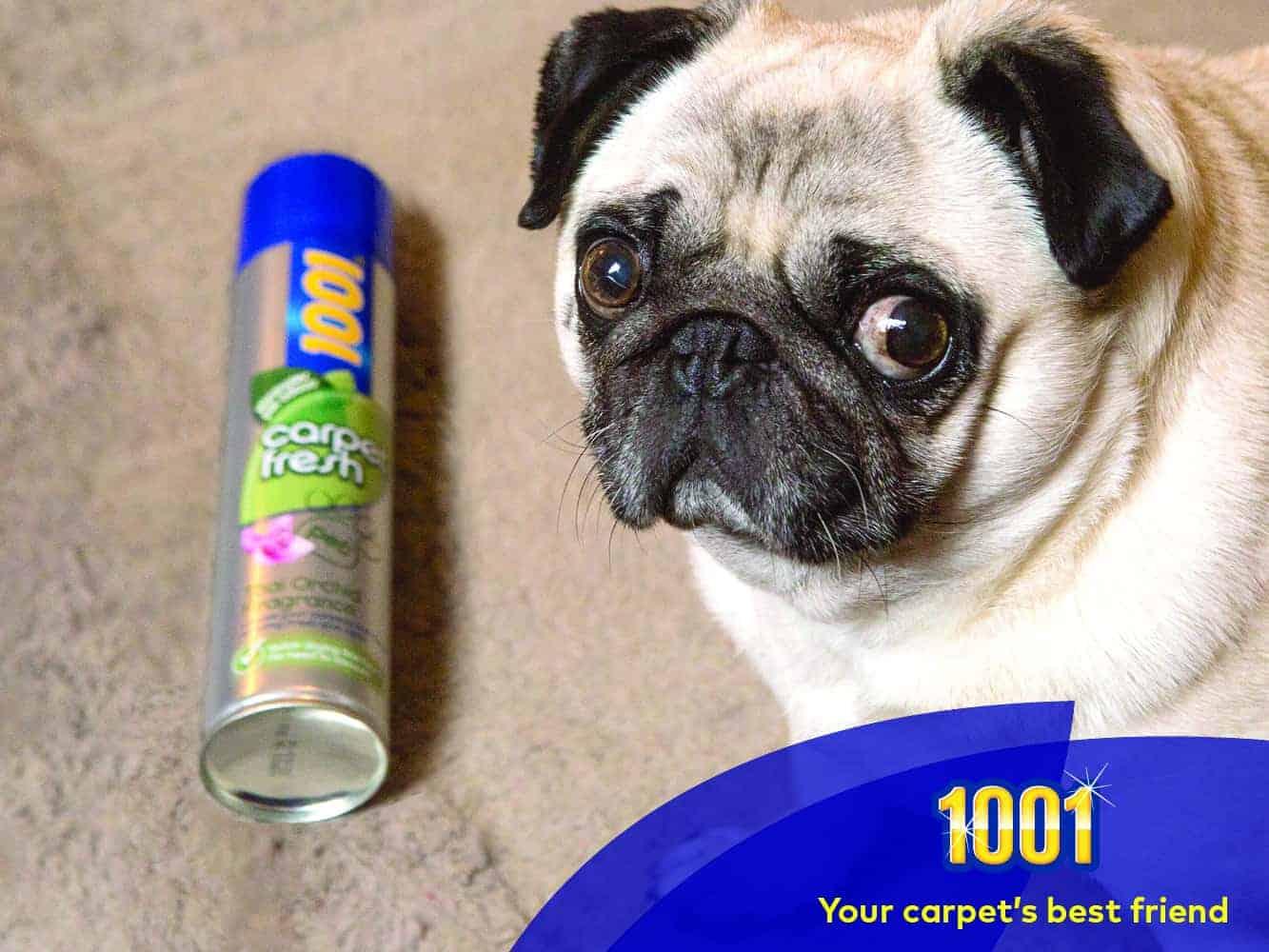 how to freshen carpet