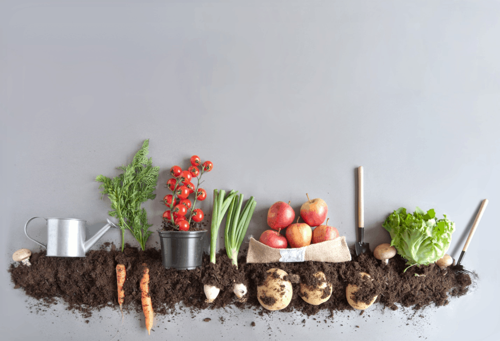 Предпазете градинските инструменти от ръжда