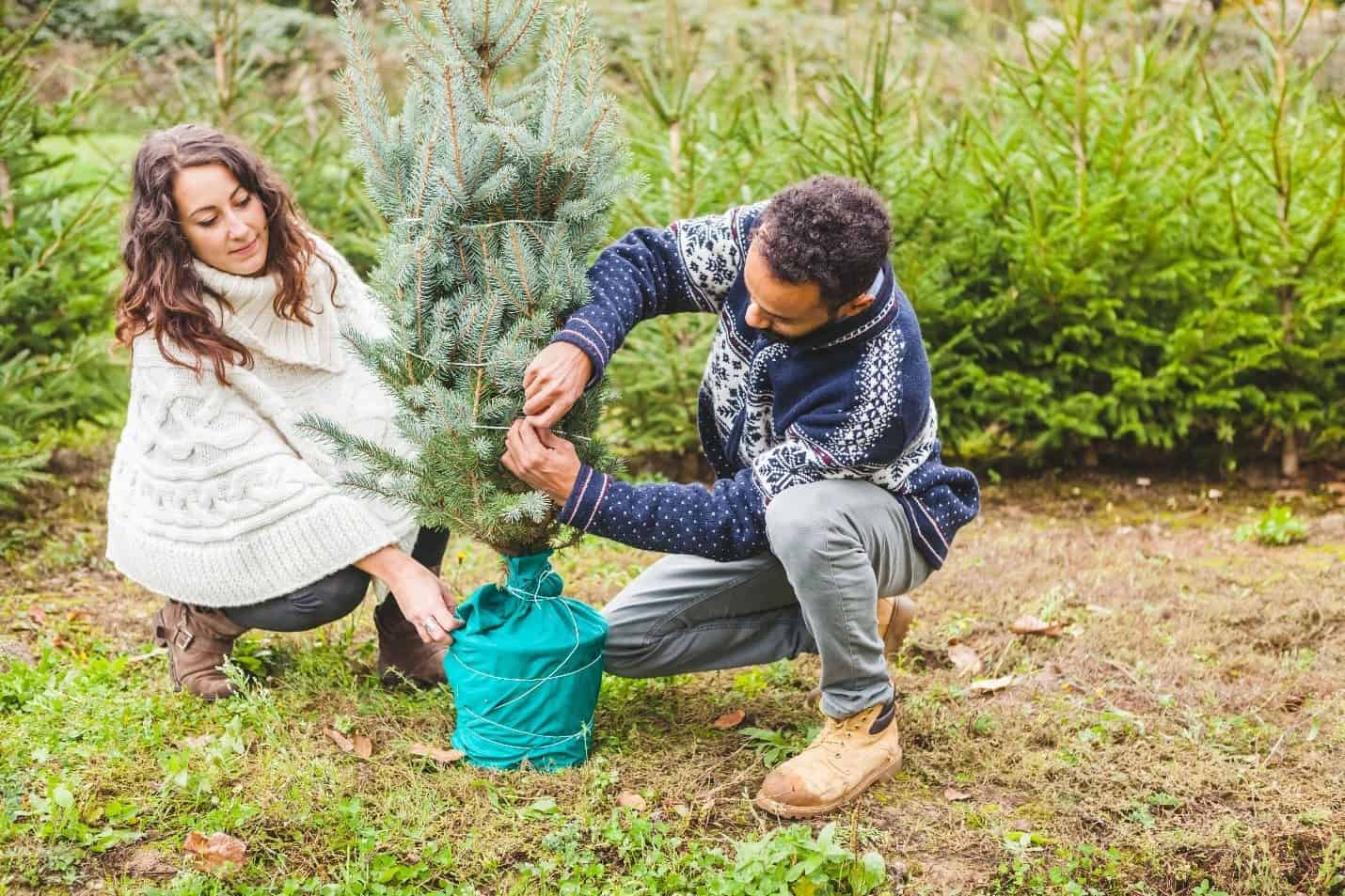 Jak po Vánocích zlikvidovat vánoční stromek