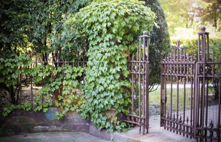 oprava brány – tipy jak odstranit rez z vaší kované plotové brány