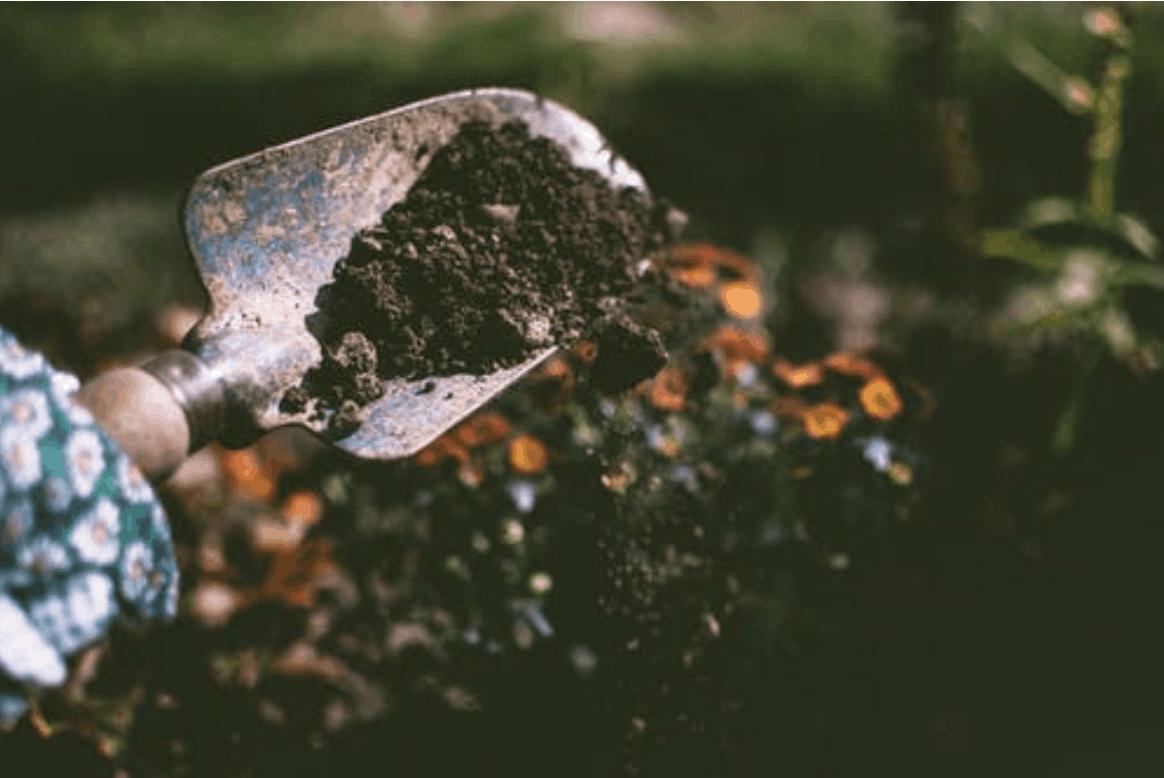 Osoba vykopávající hlínu v zahradě