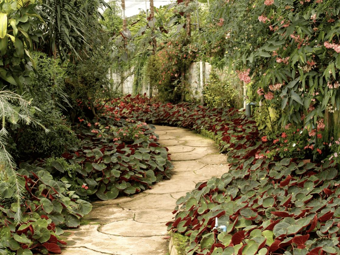 Červenohnědá zahrada
