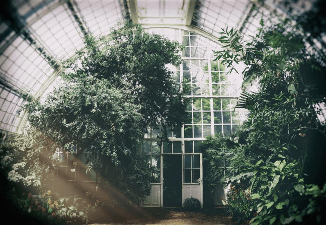 dveře v zahradě