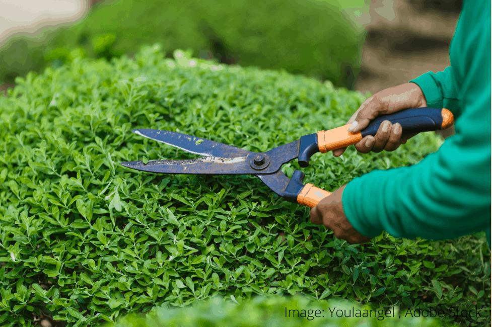 jak odstranit nečistoty ze zahradních nůžek