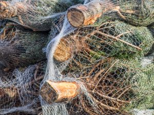 Haushaltstipps: Weihnachtsbaum aufstellen