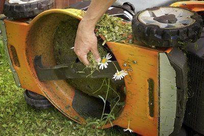 Der perfekte Rasen - so klappt's!