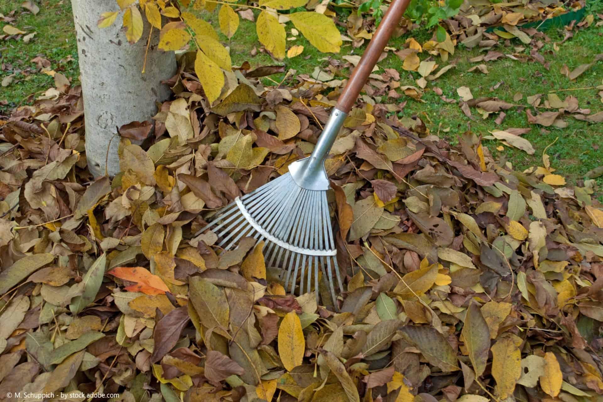 Wie kann ich meinen Garten auf den Herbst vorbereiten?