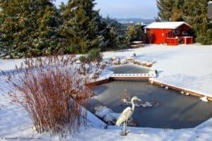 Den Garten winterfest machen - Wie schütze ich meinen Garten vor Eis und Schnee?
