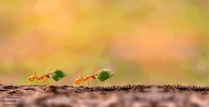 Αντιμετώπιση μερμηγκιών στις γλάστρες