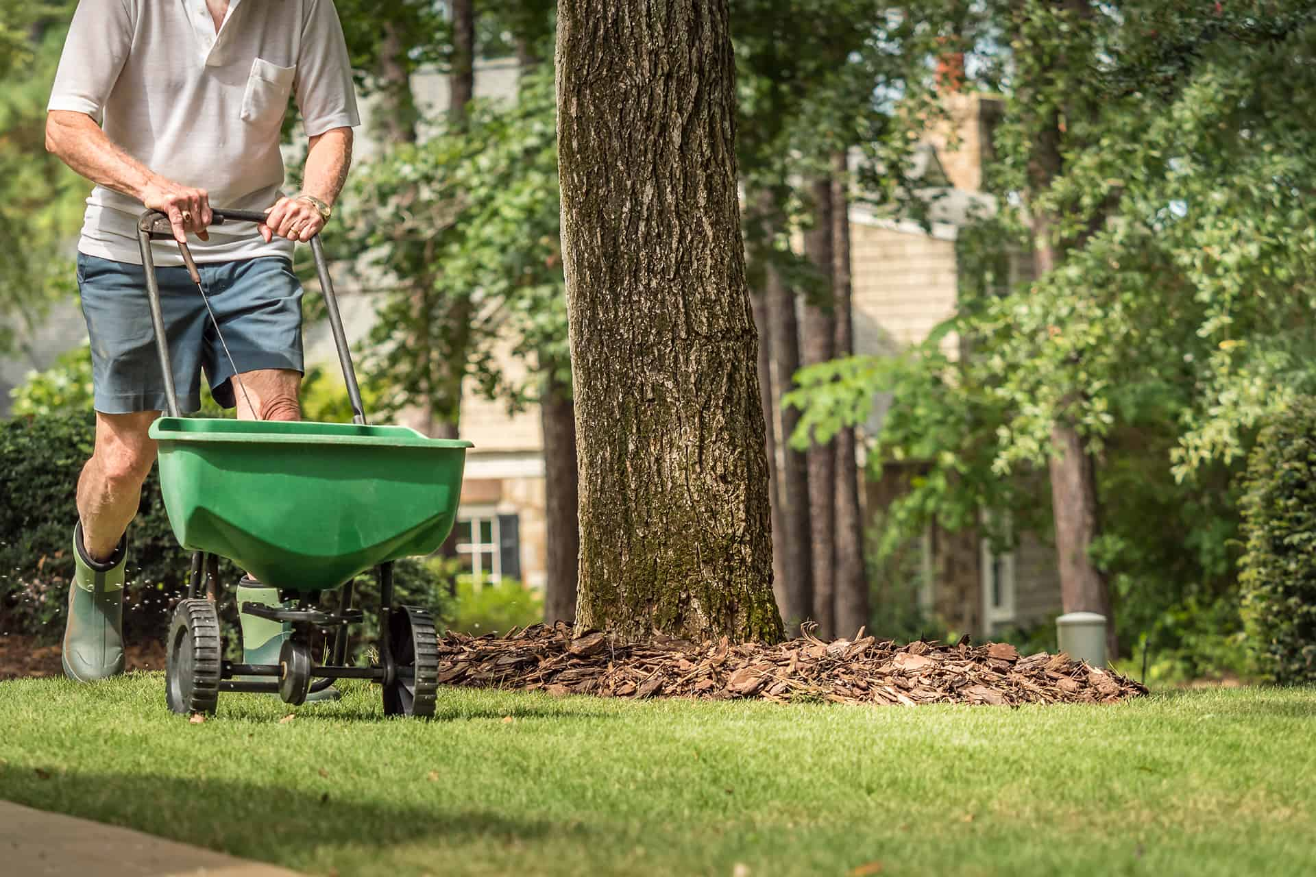 prep your lawn for the summer