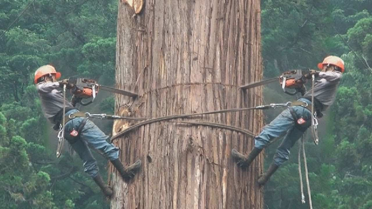 cutting oil tree surgeons