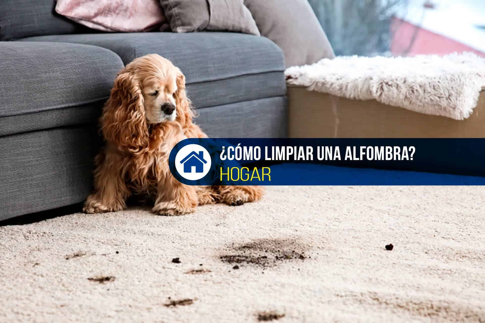 quitar mancha alfombra