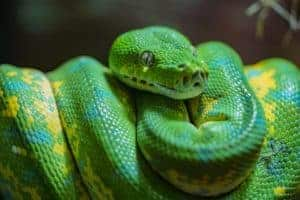 utilisations folles WD-40 python
