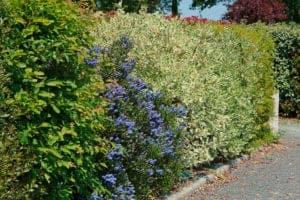 Attività di giardinaggio in autunno