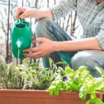 Come fare giardinaggio sul balcone?