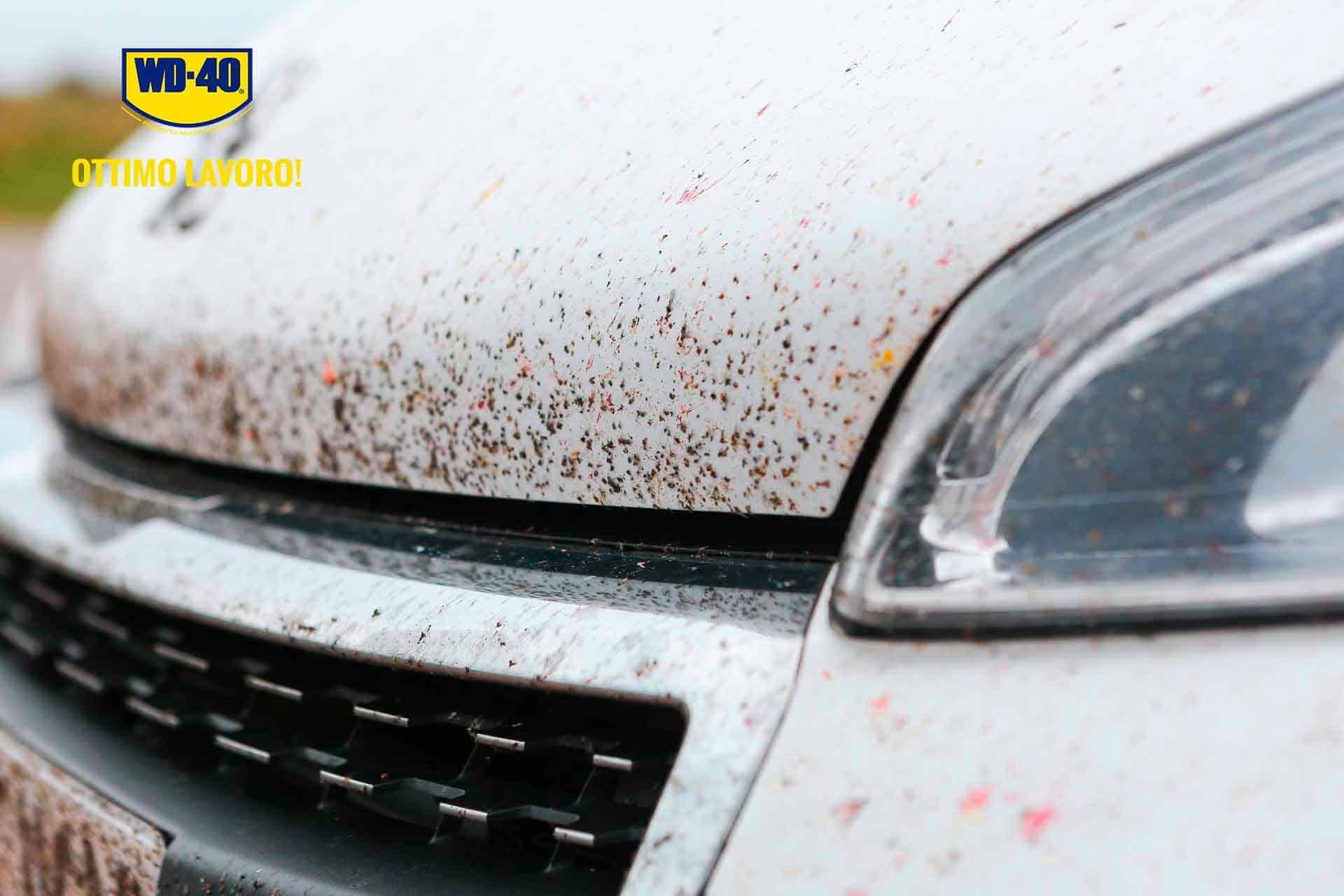 come togliere gli insetti dall'auto 9