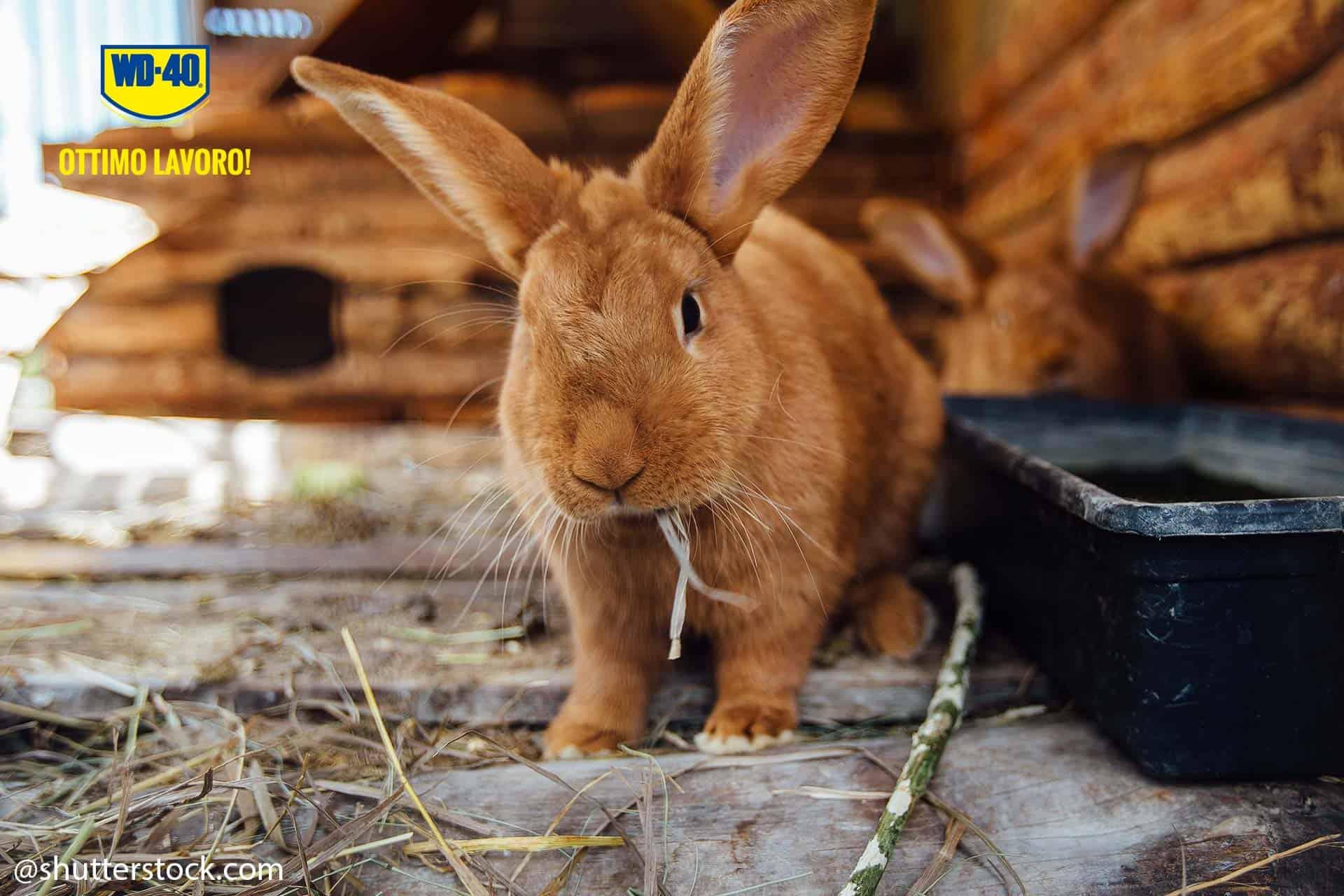 costruire una conigliera