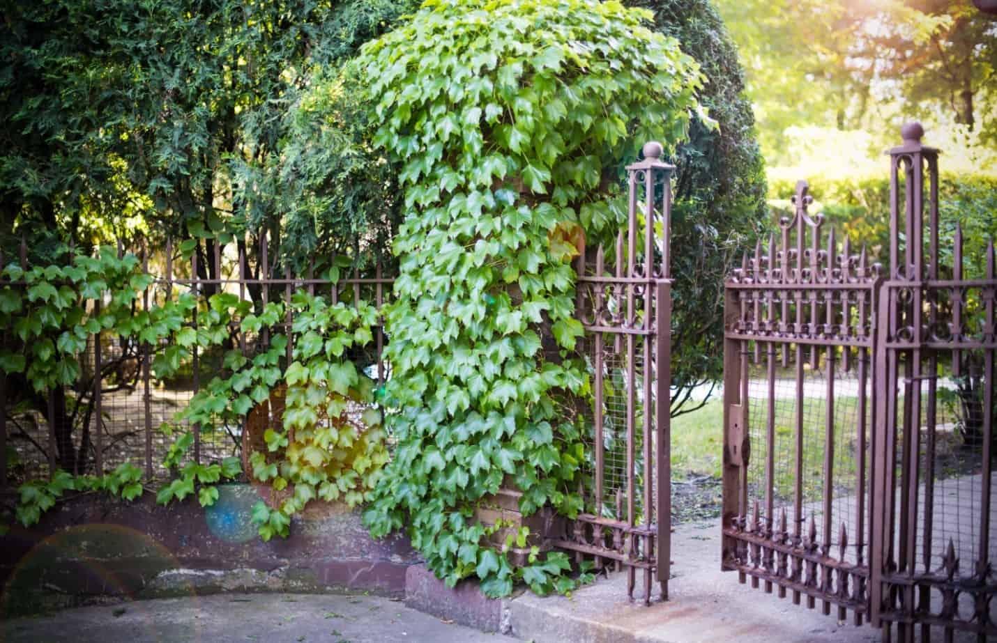 vartų, tvoros tvarkymas