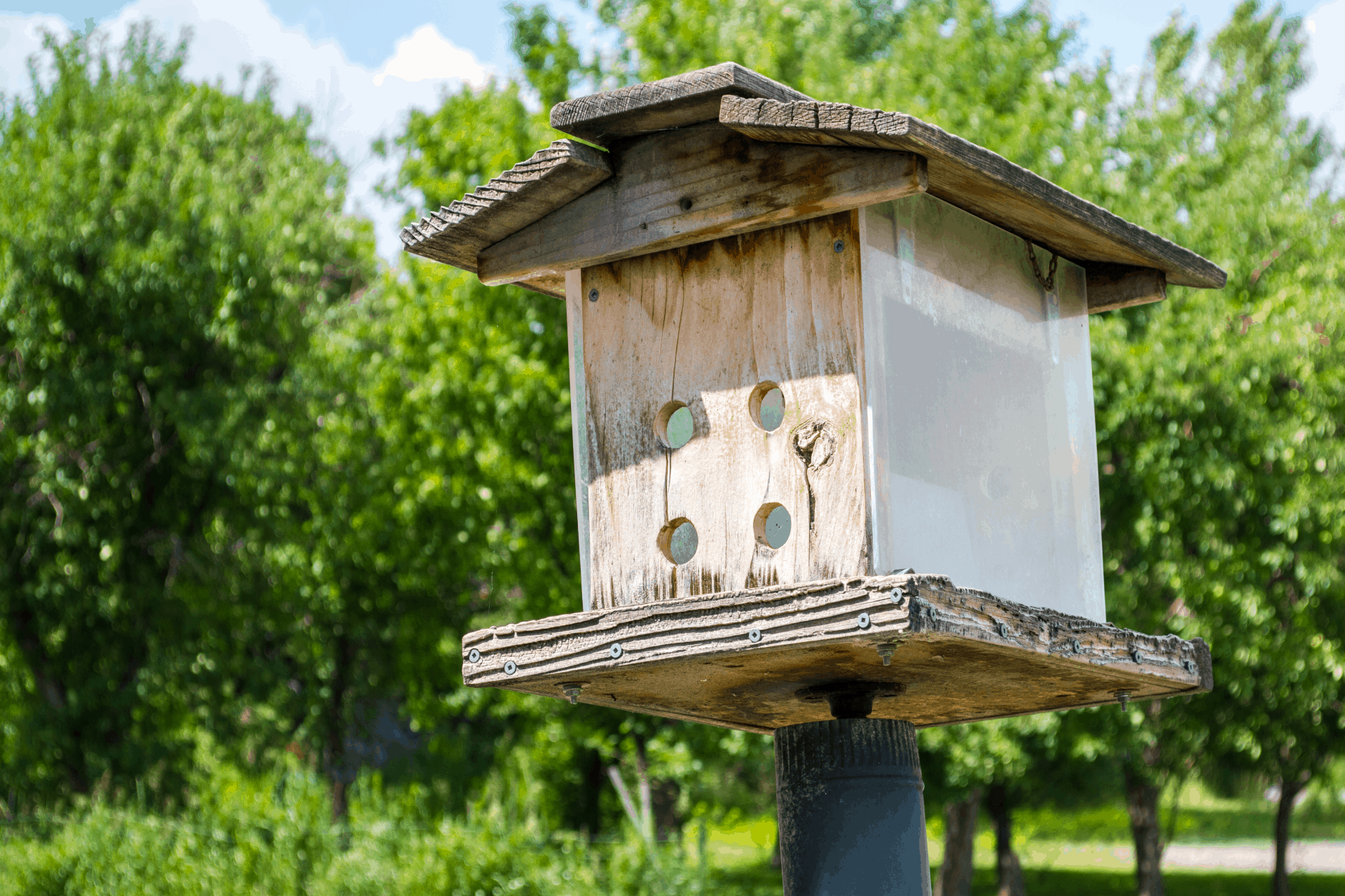 bird house hinges