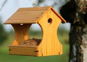 Czas zacząć czyścić dom dla ptaków
