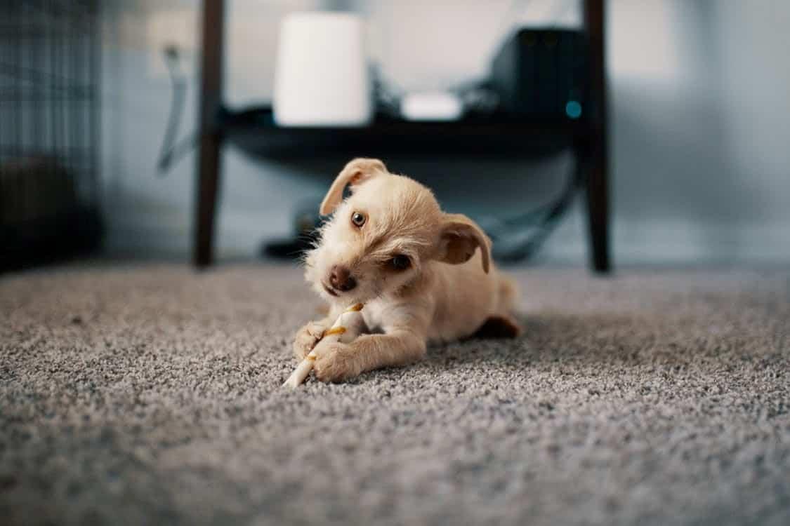 a puppy lying on a carpet