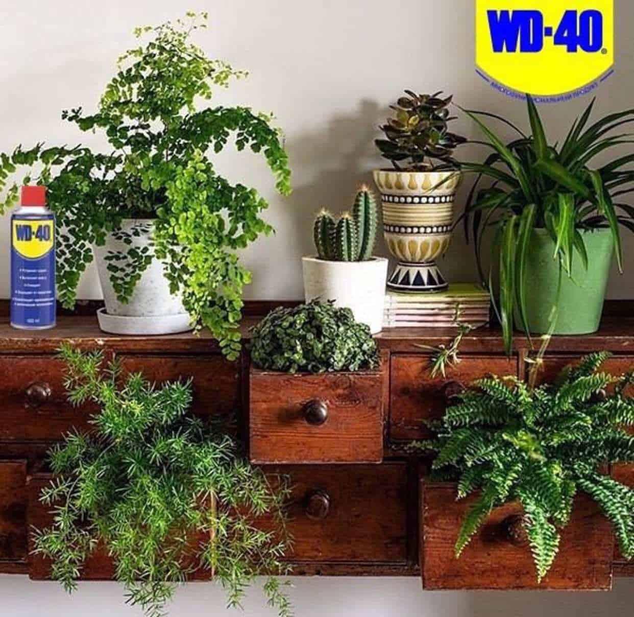 WD-40 защитит ваши горшки и растения