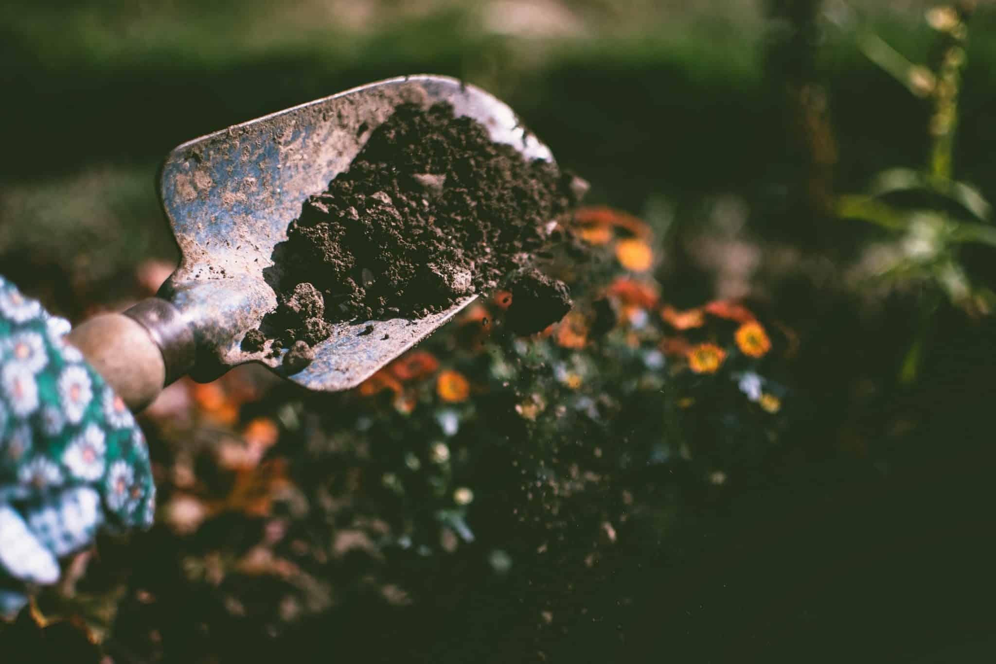 Osoba vykopávajúca hlinu na záhrade