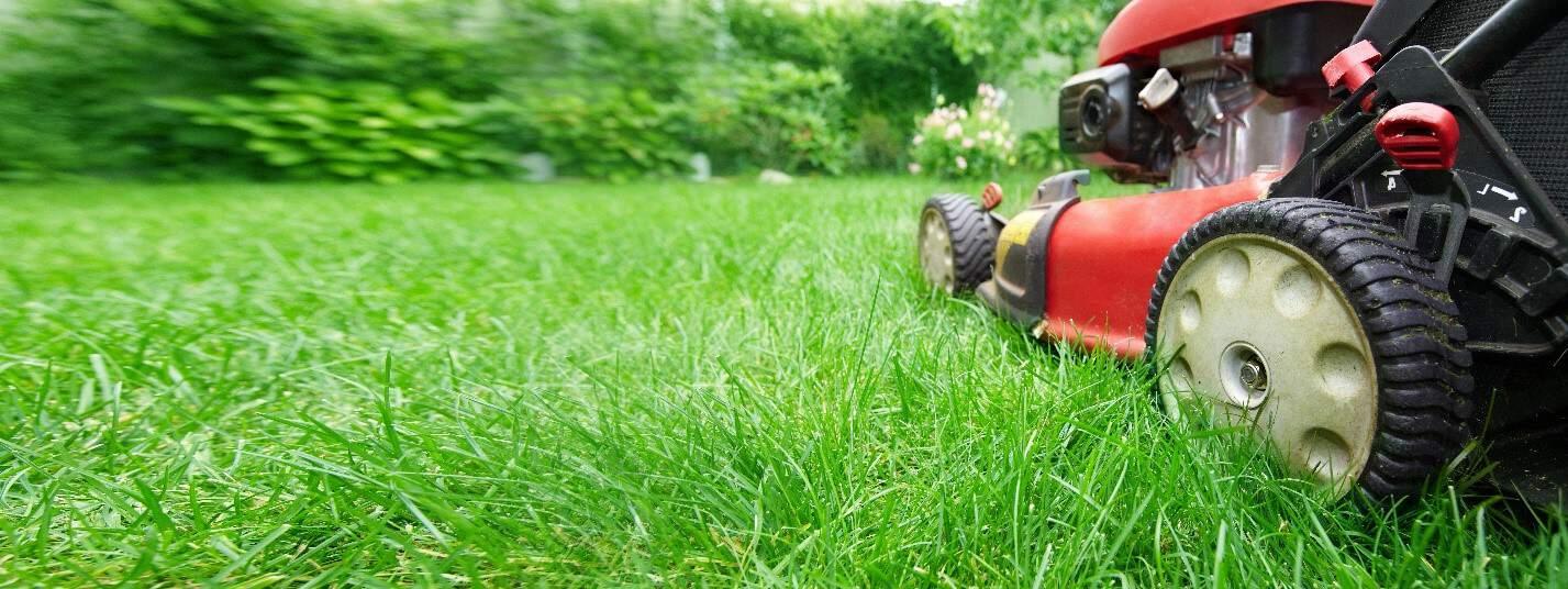 gräsklipp